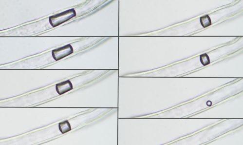 Chemtrails; Fumigación mundial de tóxicos - Página 2 Nano-fibras